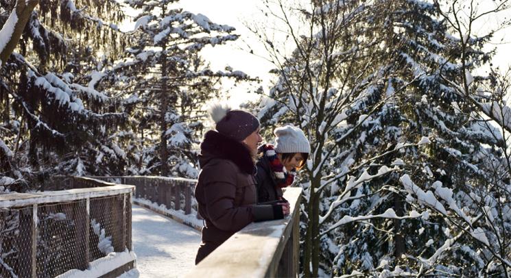 winterzauber im baumwipfelpfad im nationalpark bayerischer. Black Bedroom Furniture Sets. Home Design Ideas