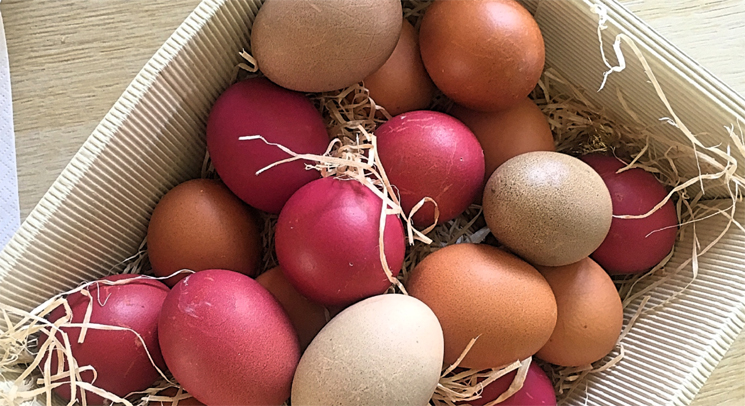 verena_eier