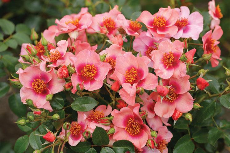 rosen_3
